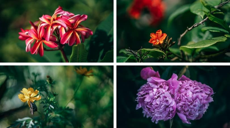 Fancy-crave-high-resolution-images-of-flowers